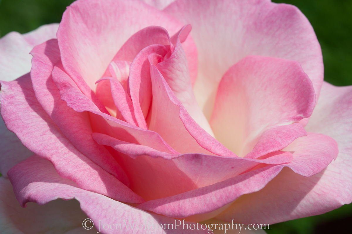 Pin Pretty Pink Flower With Yellow Buds Facebook Cover on ...