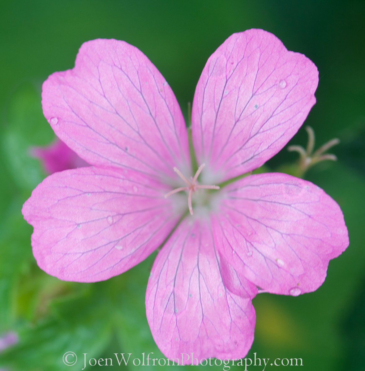 Flowers, Pretty in Pink-7 | Joen Wolfrom Photography
